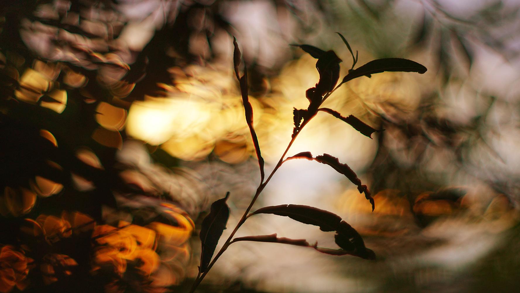 photo filler by cawtama